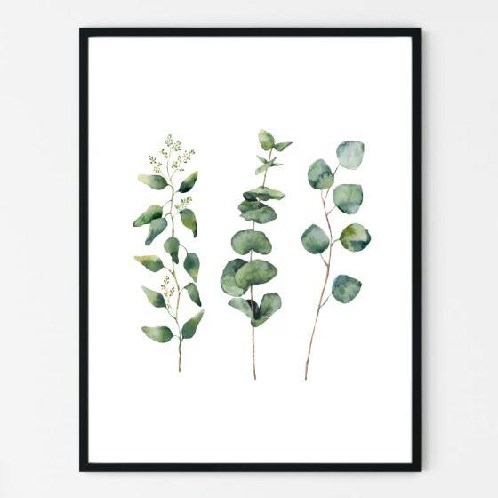 Plakat med 3 grønne eucalyptus grene på hvid baggrund - Nordisk stil