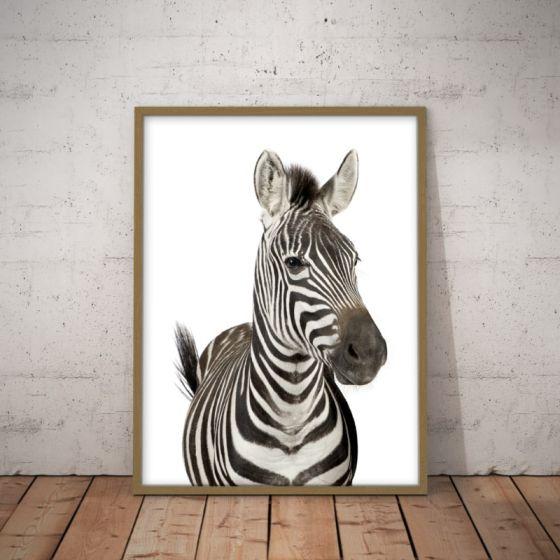 Zebra plakat - Flot plakat med dyr fra savannen - Vægdekoration til boligen