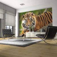 Sumatra tiger fotostat - flot foto tapet til væggen