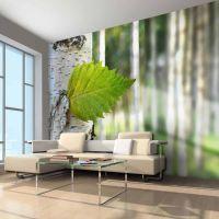 Nærbillede af blad fra birketræ fotostat - flot foto tapet til væggen