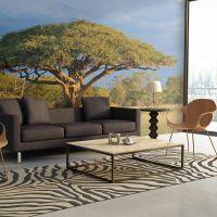 Afrikansk akacietræ, Hwange, Zimbabwe fotostat - flot foto tapet til væggen