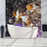 Klovnfisk fotostat - flot foto tapet til væggen