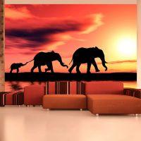 elephants: family fotostat - flot foto tapet til væggen