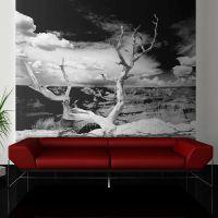 Grand Canyon træ fotostat - flot foto tapet til væggen