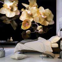 Orchids in ecru color fotostat - flot foto tapet til væggen