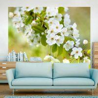 Smukke sarte kirsebær blomster fotostat - flot foto tapet til væggen