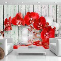 Ruby orchid fotostat - flot foto tapet til væggen