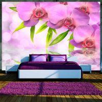 Orchids in lilac colour fotostat - flot foto tapet til væggen
