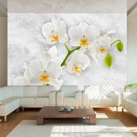 Lyrical orchid - White fotostat - flot foto tapet til væggen