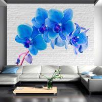 Blue excitation fotostat - flot foto tapet til væggen