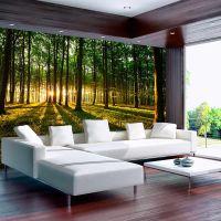 Spring: Morning in the Forest fotostat - flot foto tapet til væggen