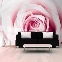 Rose maze fotostat - flot foto tapet til væggen