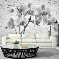 Orchid in Shades of Gray fotostat - flot foto tapet til væggen